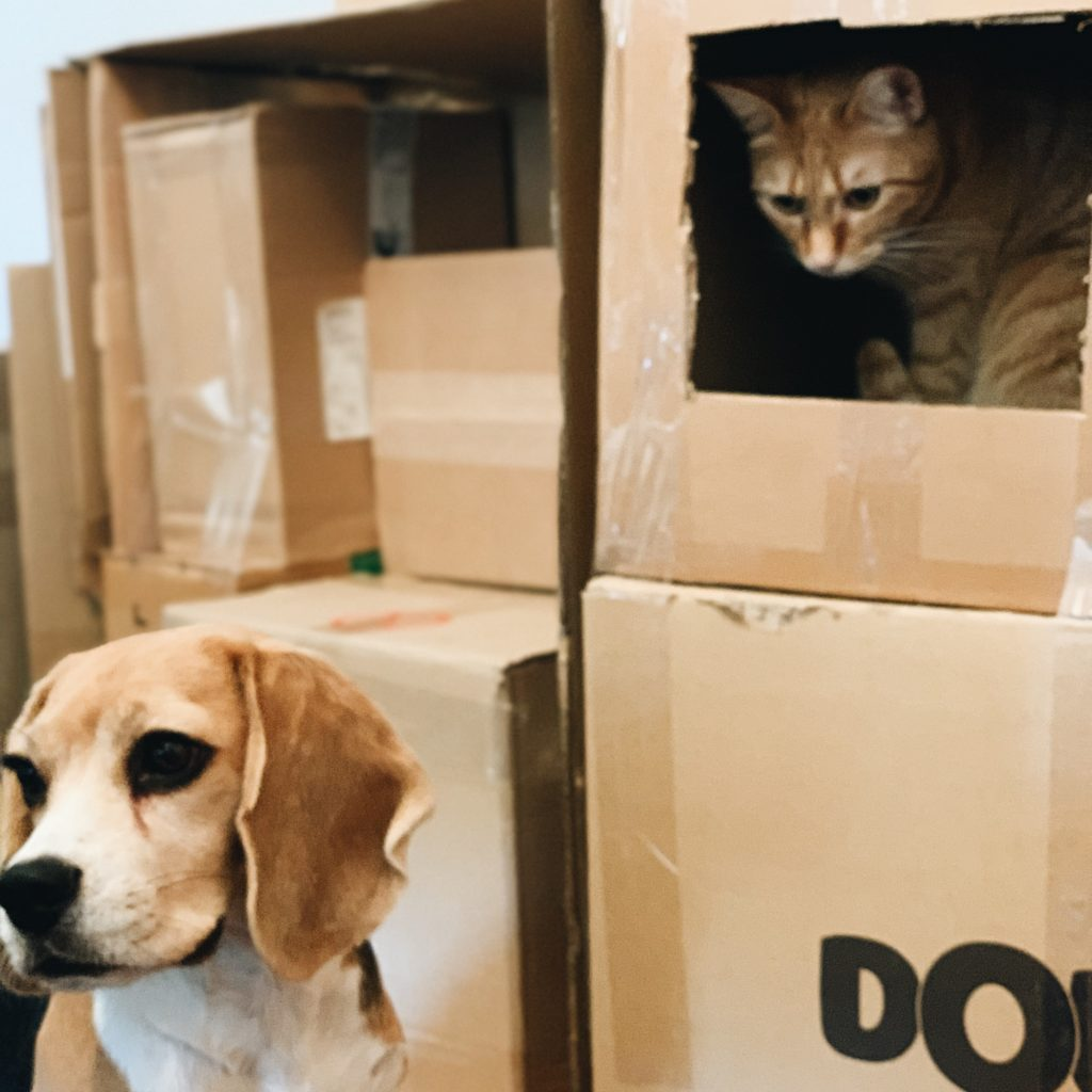 chien chat carton